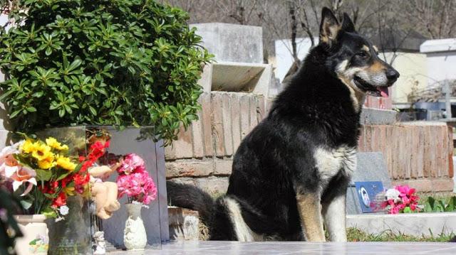 Un perro lleva 9 años junto a la tumba de su dueño
