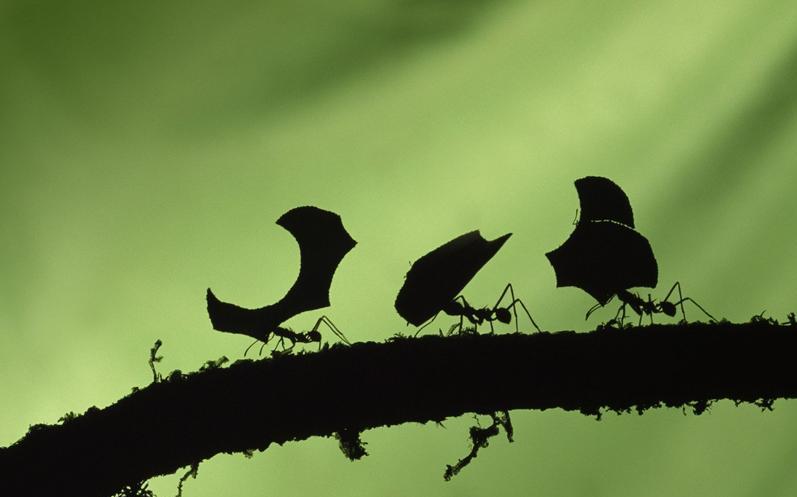 Estudio revela que las hormigas son, en realidad, unas flojas
