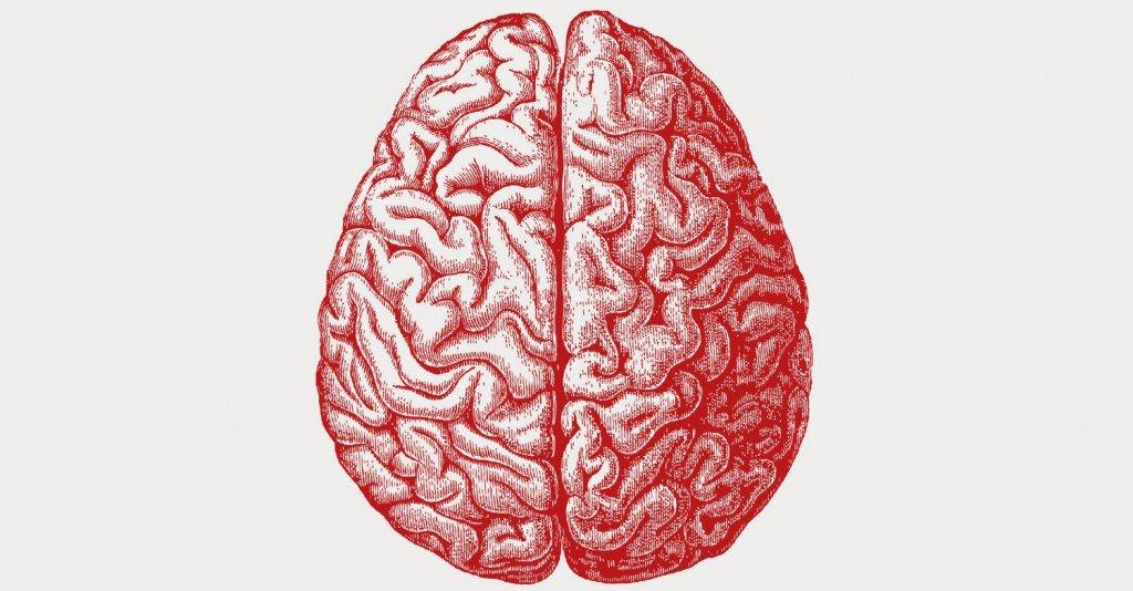 ¿Realmente necesitamos un cerebro?