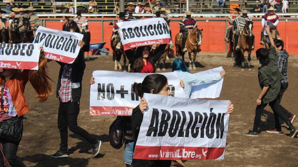 Maltrato animal: Activistas funaron rodeo en Coquimbo
