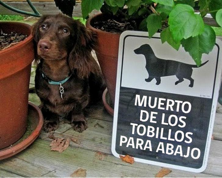 """Humor: 26 carteles de """"cuidado con el perro"""" que sin duda producen más RISA que miedo"""