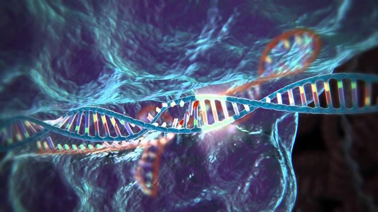 """La técnica para """"editar"""" el ADN, premiada por Science y favorita para un Nobel"""