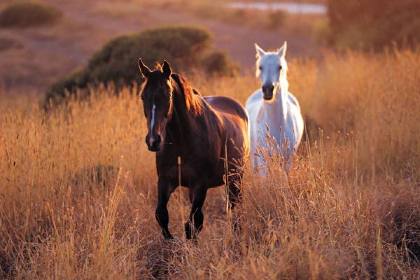 Los caballos tienen consciencia