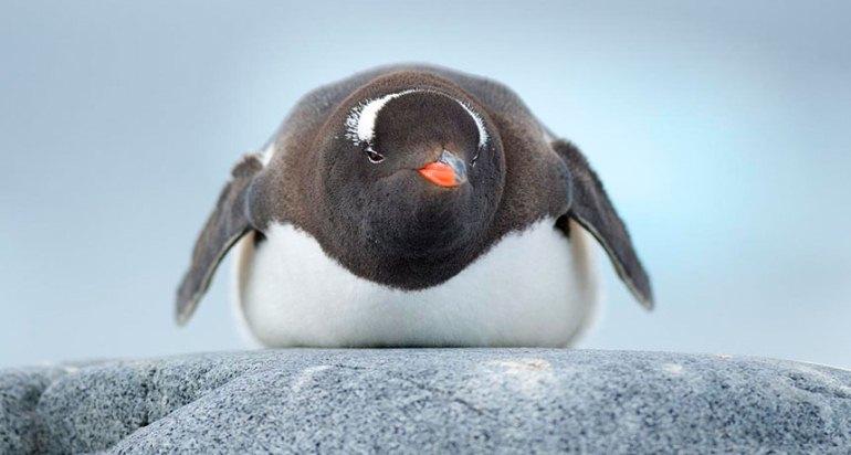 La industria aeronáutica se está inspirando en los pingüinos