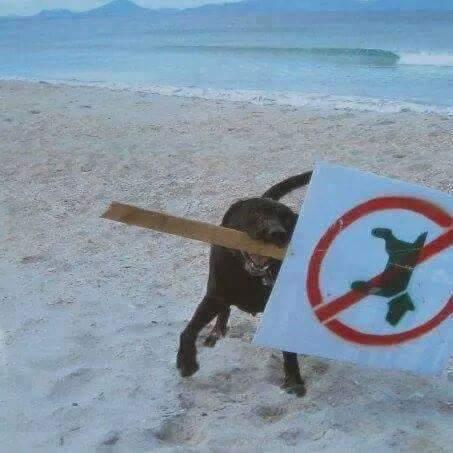 Nueva normativa anti mascotas azota las costas chilenas
