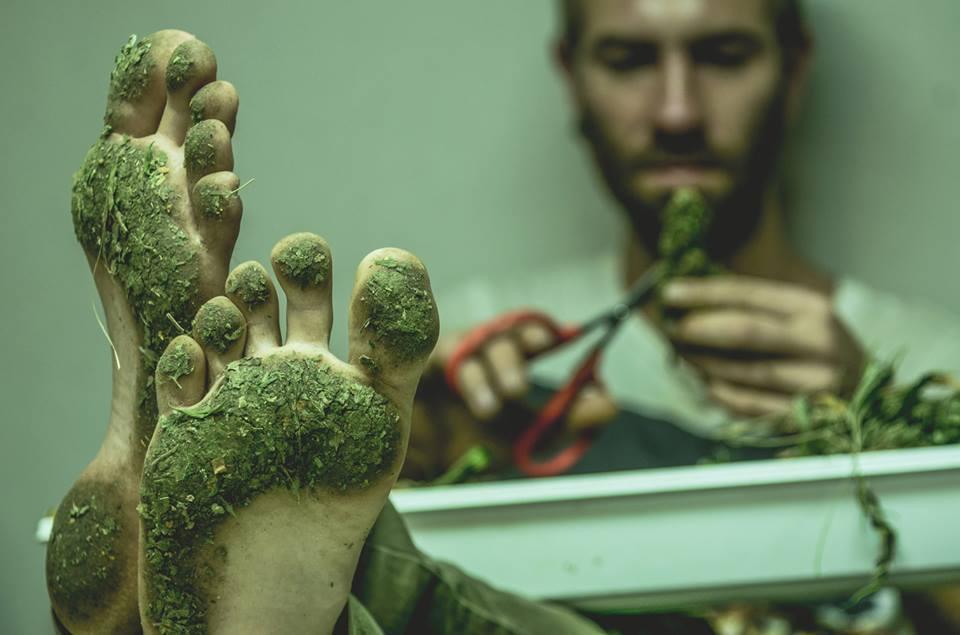 ¿Qué le pasará a tu memoria en el futuro si consumes marihuana hoy?