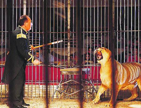 Presentan proyecto de ley para prohibir actuación con animales amaestrados en circos