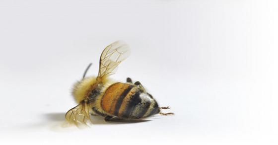 Tres investigaciones que demuestran que la acción humana es la culpable de la muerte de las abejas