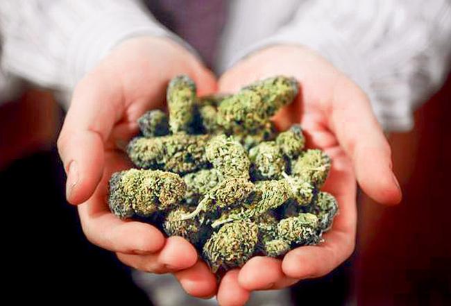 La verdadera e inimaginable razón por la que se prohíbe la marihuana