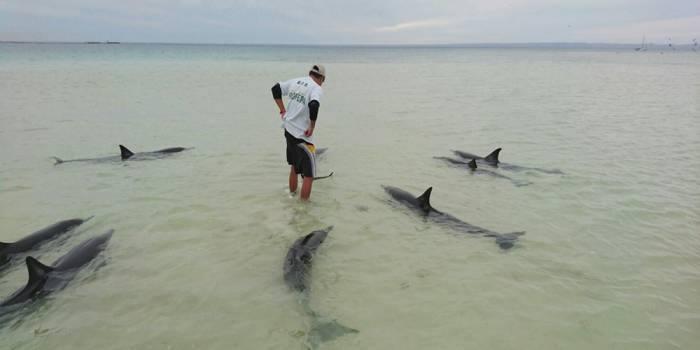Crean red para ayudar a mamíferos varados en aguas de Yucatán