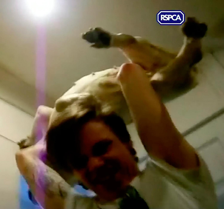 Maltratadores recibieron irrisoria pena tras vejar a su mascota