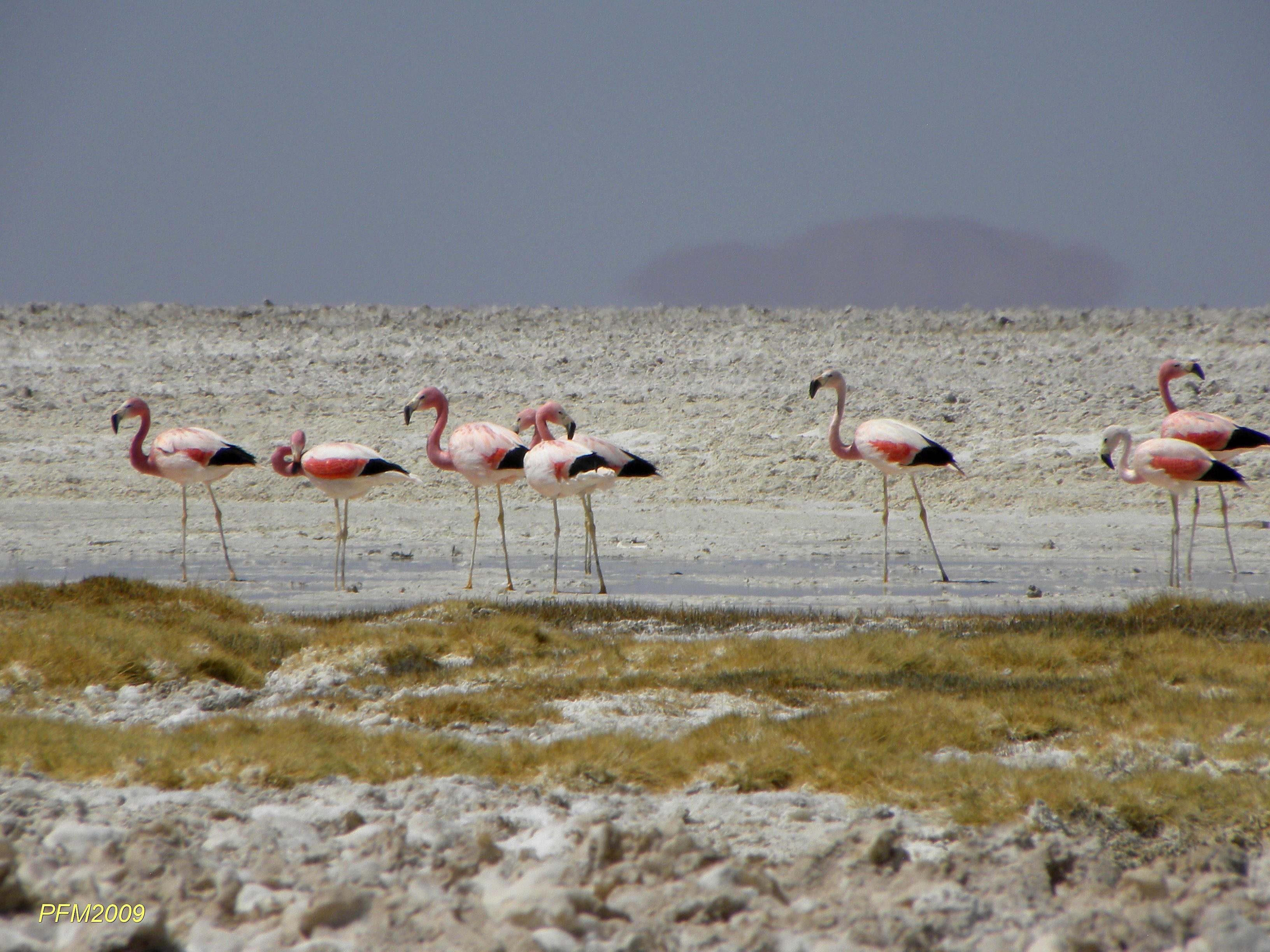 El 'acuerdo de caballeros' que Minera Escondida nunca respetó y que amenaza la fauna nativa