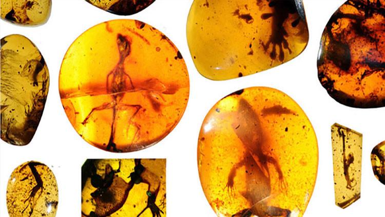 Lagartijas de hace 99 millones de años podrían abrir la puerta al «mundo perdido»