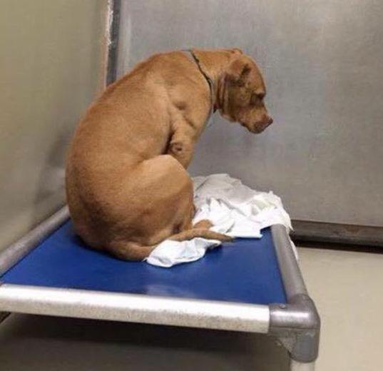 Depresión: Perrito pasa sus días mirando a la pared después de una adopción fallida