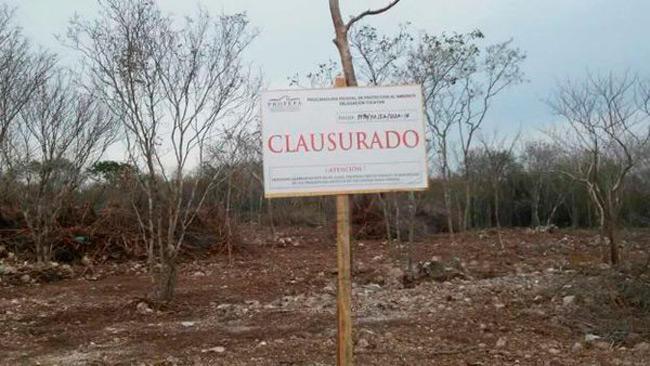 Detienen construcción en la selva de Yucatán