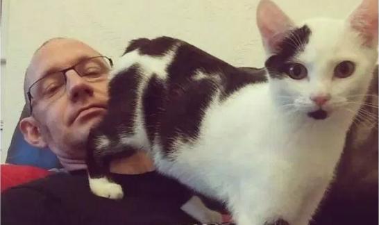 18 Cosas que NO entenderás si no tienes un gato como mascota