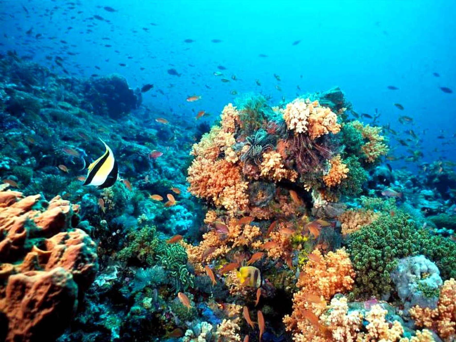 Ambientalistas denuncian peligro de contaminación en arrecife coralino de Puerto Morelos