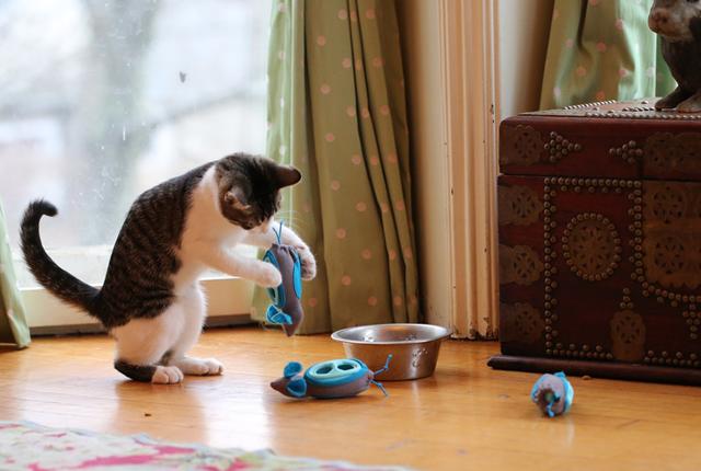 """Este sistema de alimentación permite que los gatos """"cacen"""" su propia comida"""