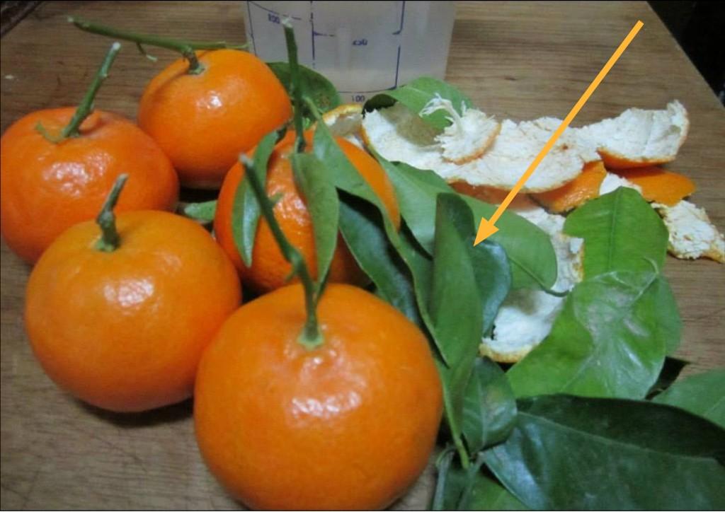 Estos son los beneficios que no conocías de las hojas de naranjo