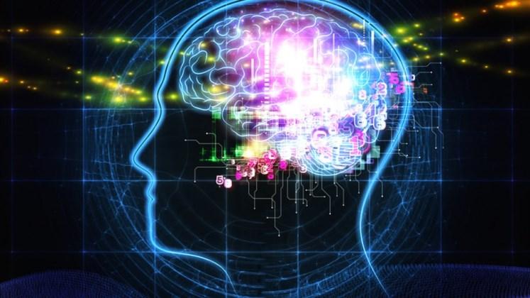 Científicos descubren la base neuronal de la inteligencia humana