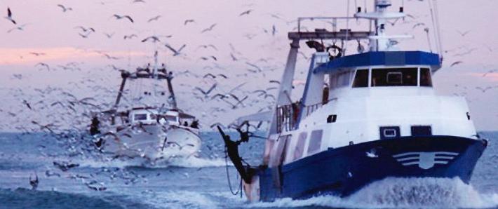 """""""Ley Longueira"""": Acusan a El Mercurio de favorecer la posición de la industria pesquera"""