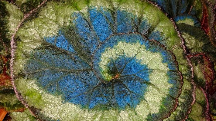 Esta planta usa la mecánica cuántica para hacer la fotosíntesis más eficiente