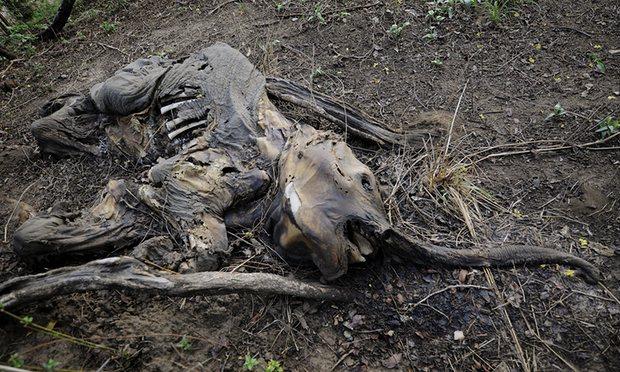 El descenso de las especies animales en la Tierra se compara con la masiva extinción de los dinosaurios