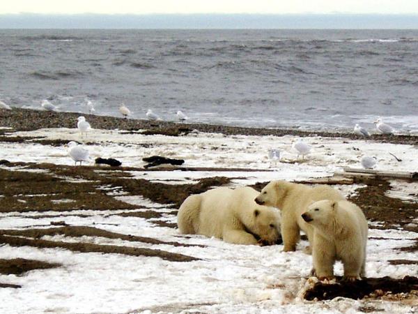 Las temperaturas del Ártico han alcanzado niveles alarmantes, a pesar de que el invierno está por comenzar