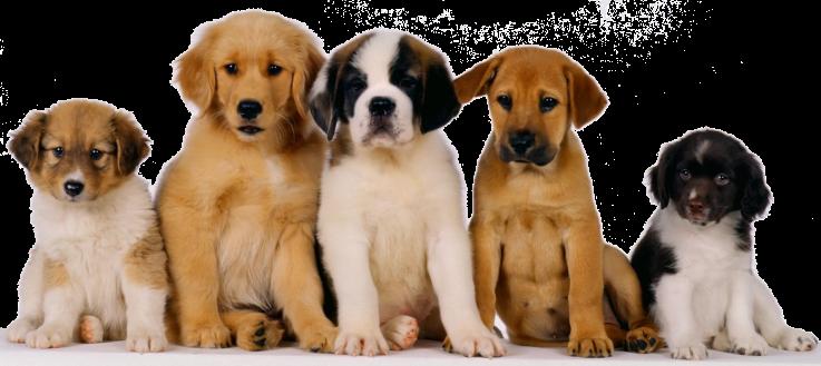 Los perros tienen memoria y pueden recordar las acciones de sus dueños