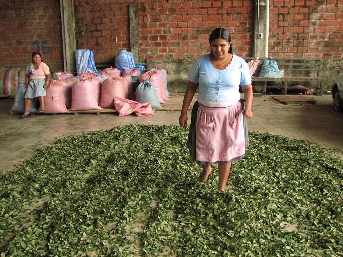 Evo Morales anunció que Bolivia exportará coca a Venezuela