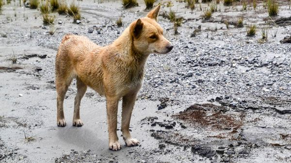 Parlamento de Panamá aprueba pena de cárcel para quienes maten a las mascotas