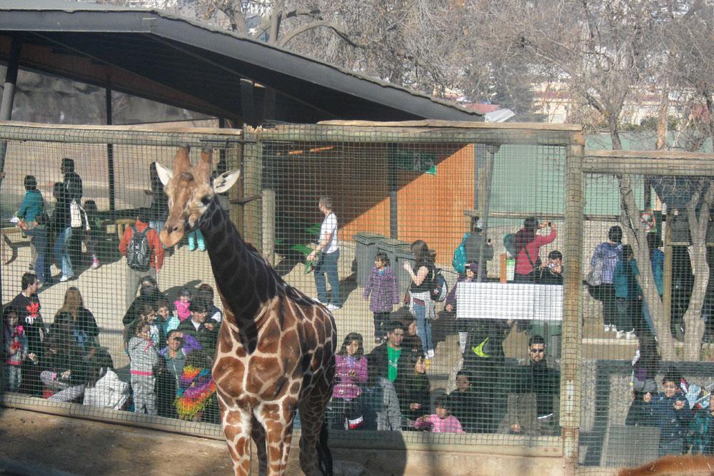 Frente Amplio por los Animales propone una «reconversión de los zoológicos»
