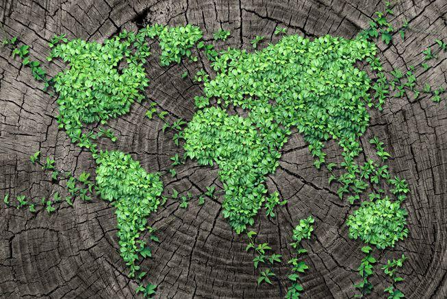 Un quinto de las plantas del mundo está en peligro de extinción