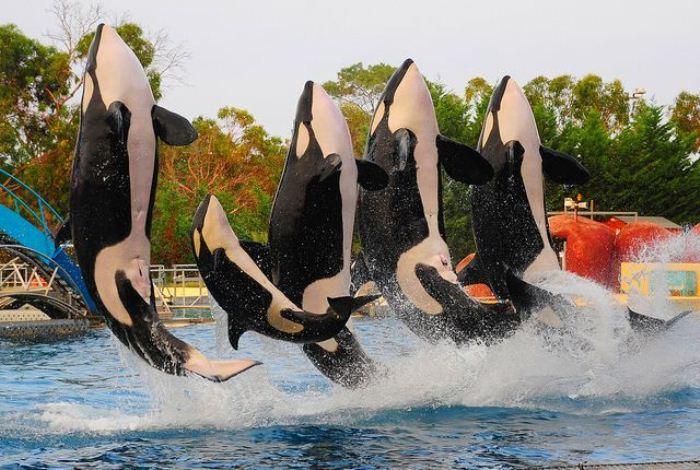 Francia establece fuertes restricciones al cautiverio y uso de animales en acuarios