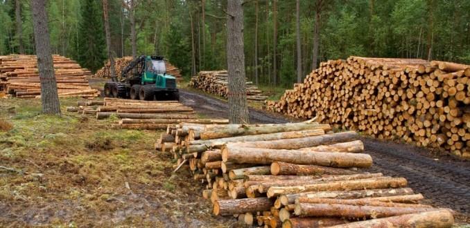 Gato por liebre: Rechazan maniobra del Gobierno para presionar por nuevo modelo forestal