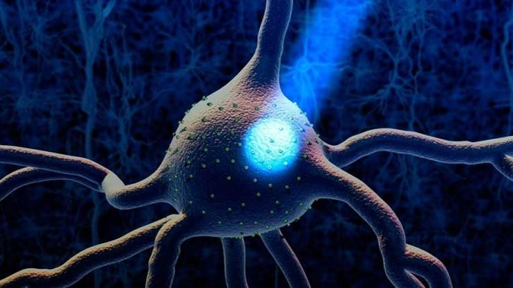 Reactivan recuerdos en ratones con Alzheimer usando láser