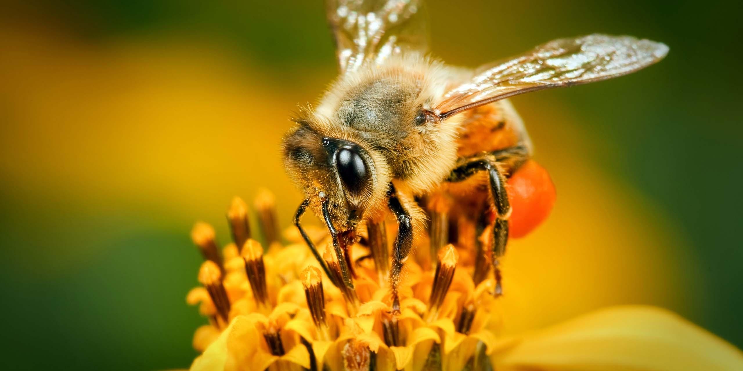 """Isabel Tagle, apicultora: """"Son un elemento vital para la sociedad y el mundo. Sin abejas, no hay alimentación"""""""
