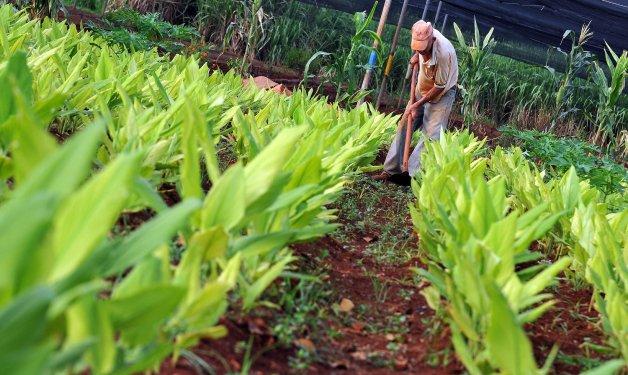 Cuba: Científicos logran crear variedades de vegetales resistentes a cambios del clima