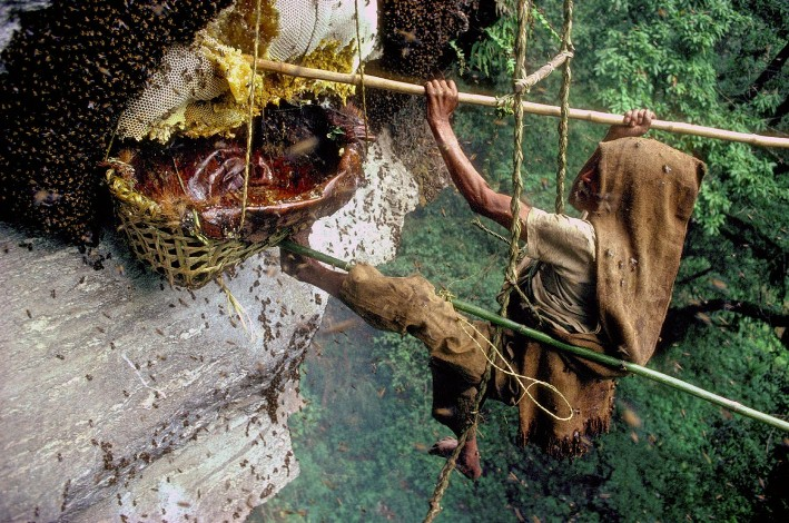 Cómo los Kulung arriesgan sus vidas por obtener un 'manjar de los dioses': la miel alucinógena del Himalaya