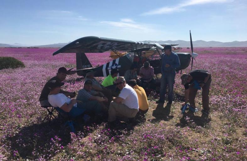 Las explicaciones de los aviadores que aterrizaron sobre desierto florido
