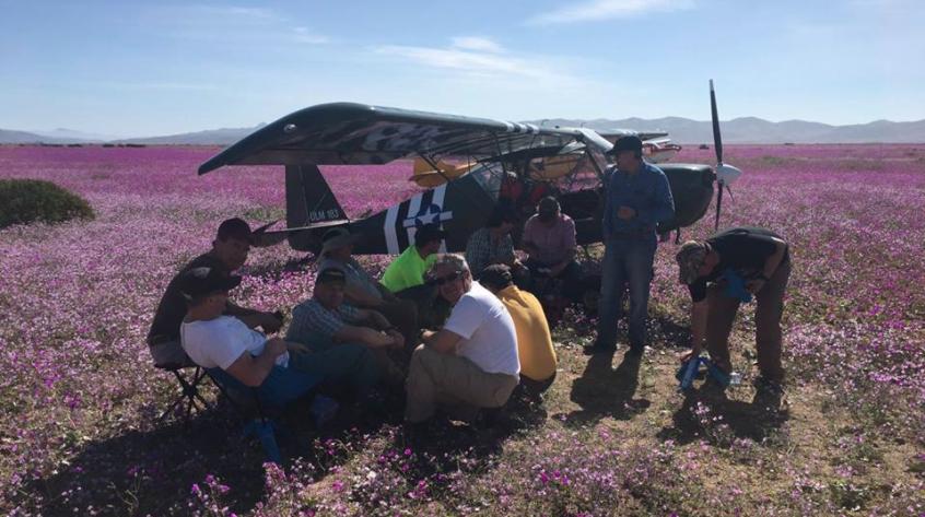 Pilotos que aterrizaron en el desierto florido arriesgan cancelación de licencias