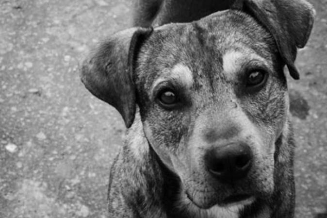 Vecinos podrán adoptar a 15 perros abandonados en departamento de Providencia