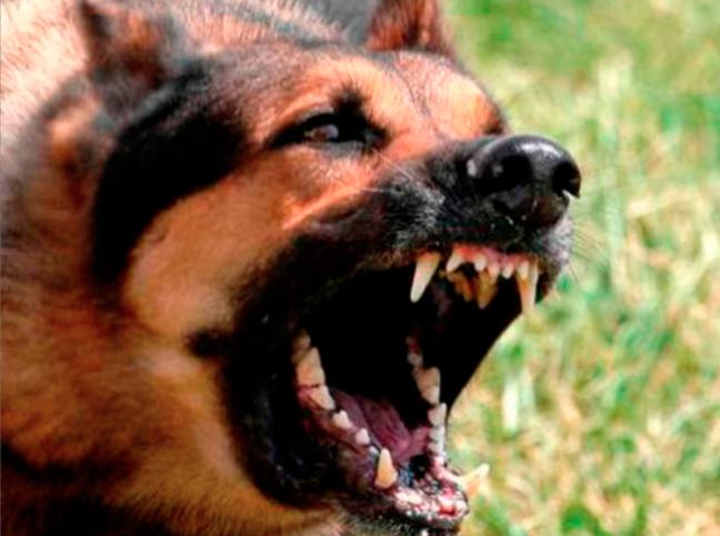"""Una región de Rusia quiere prohibir a los perros ladrar """"fuera de horario"""""""