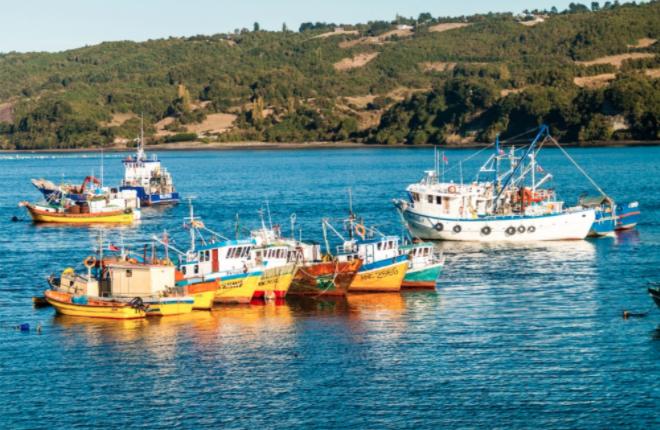 Reineteros de Dalcahue podrían bloquear canal de Chacao si no se restringe pesca de arrastre