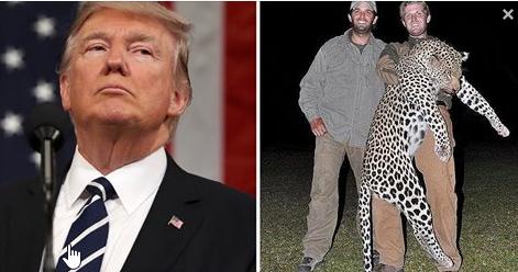 Trump cambió la ley para que gente como sus hijos corte cabezas de elefantes y las ingrese a USA
