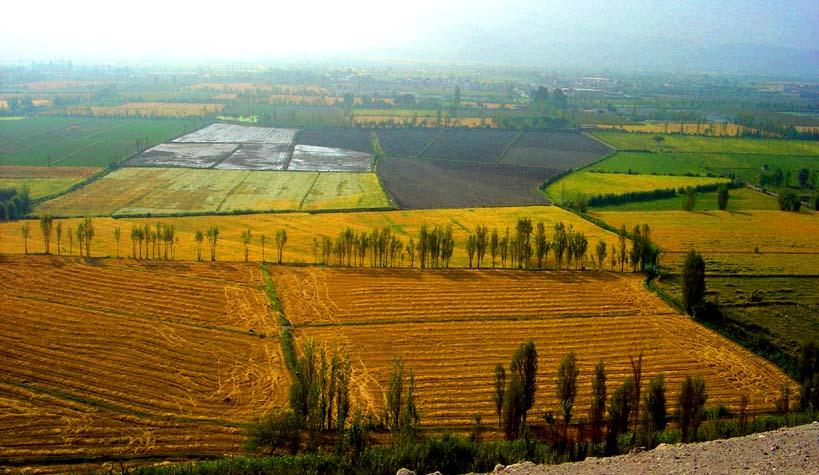 El lucrativo negocio del acaparamiento de tierras