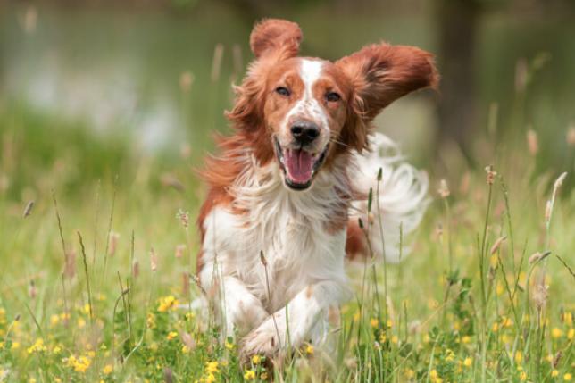 Criar un perro reduce notoriamente el riesgo de morir
