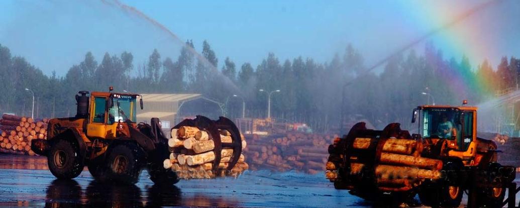 Condenan a forestal del grupo Matte y contratista a indemnizar en $102 millones a familia de trabajador muerto