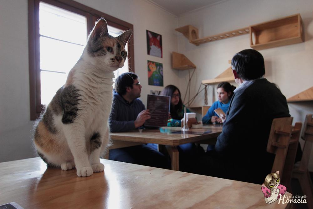 La casa de la Gata Horacia: una experiencia de amor entre felinos y humanos