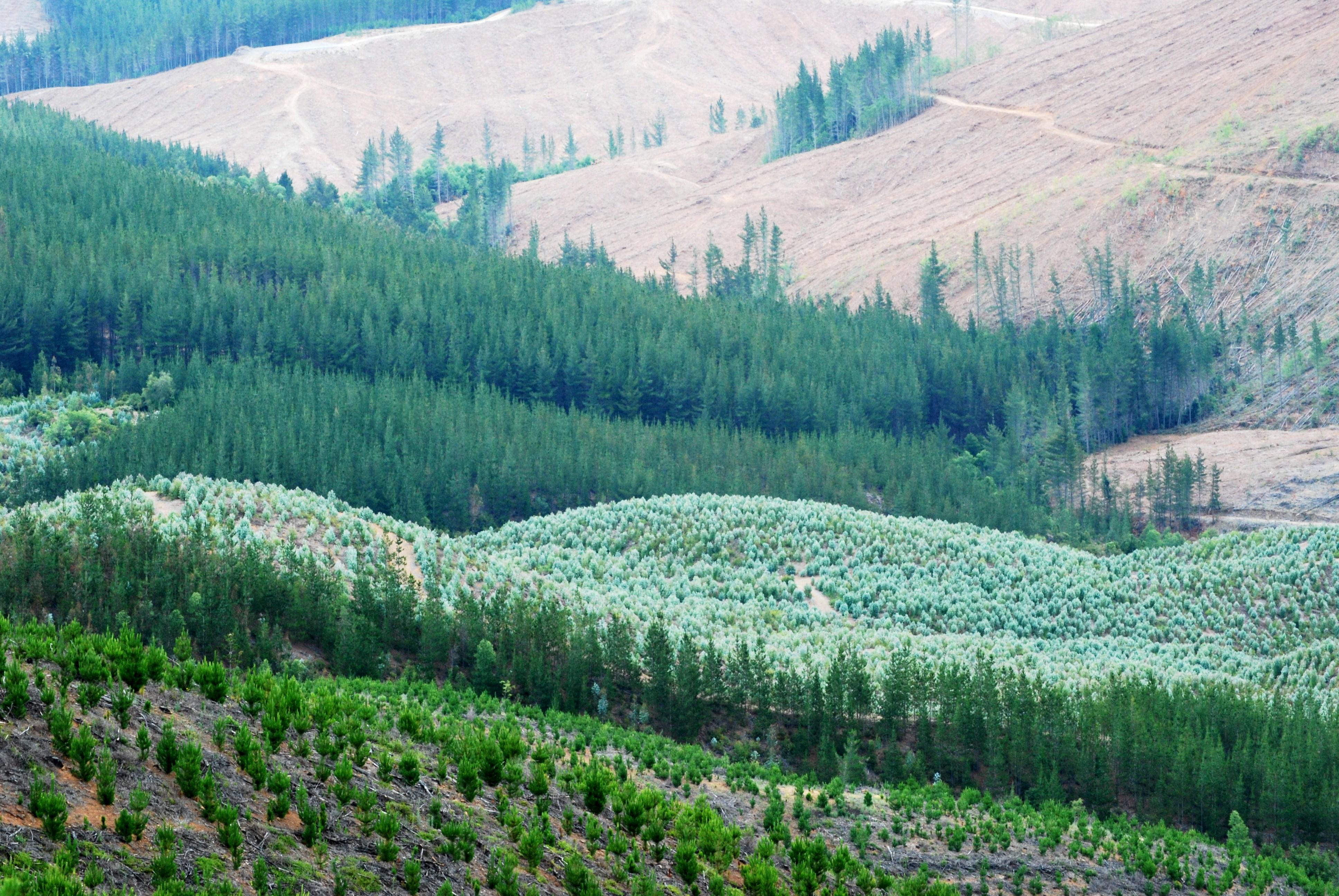 Agrupación de Ingenieros Forestales se retira de la Iniciativa Nacional de Certificación Forestal FSC